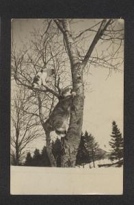 Treed Cats