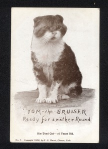 Tom the Bruiser