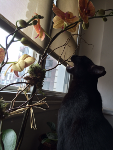 Blackie Eats the Orchid