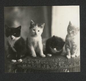 kittens 2