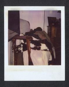 Otto 4/16/95