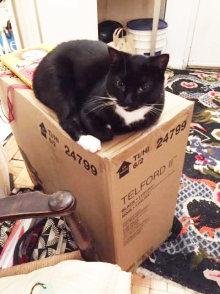 Cookie Finds the Box